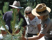 Citizen scientiest assist with tree monitoring as part of the park's phenology program