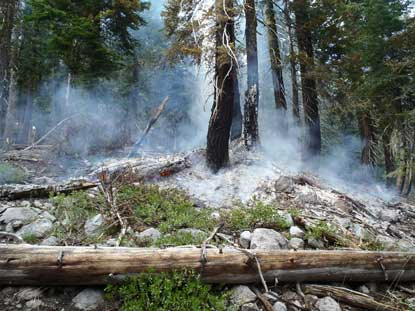 A lightning caused fire smolders in forest understory