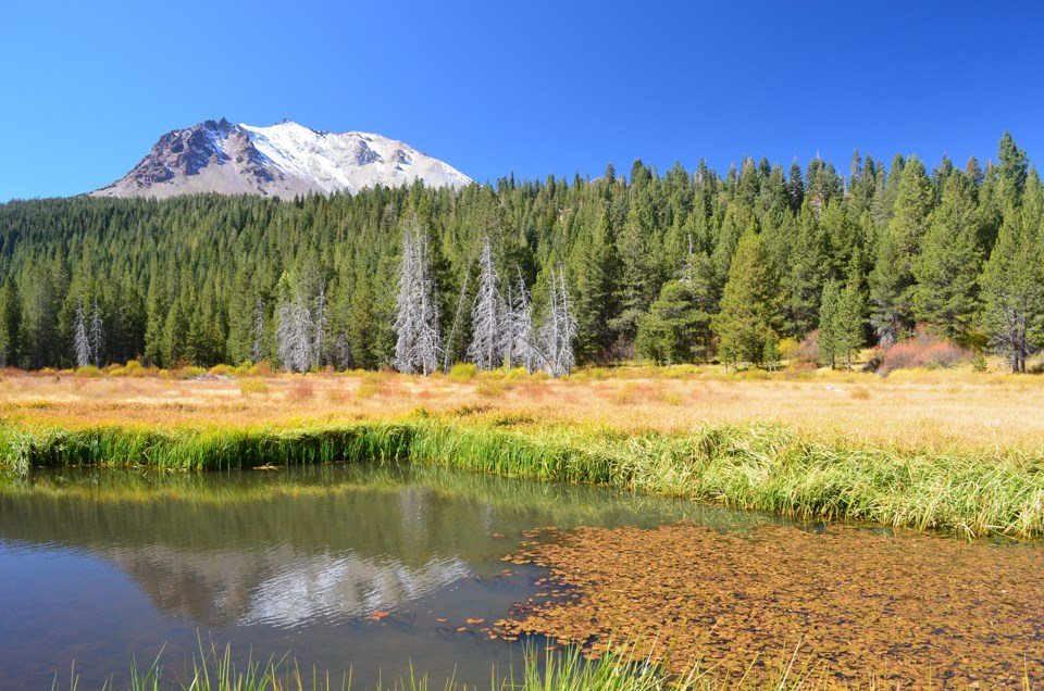 Orange leaves float on a pond backed by green and yellow grasses at the based of a mountain dusted with snow