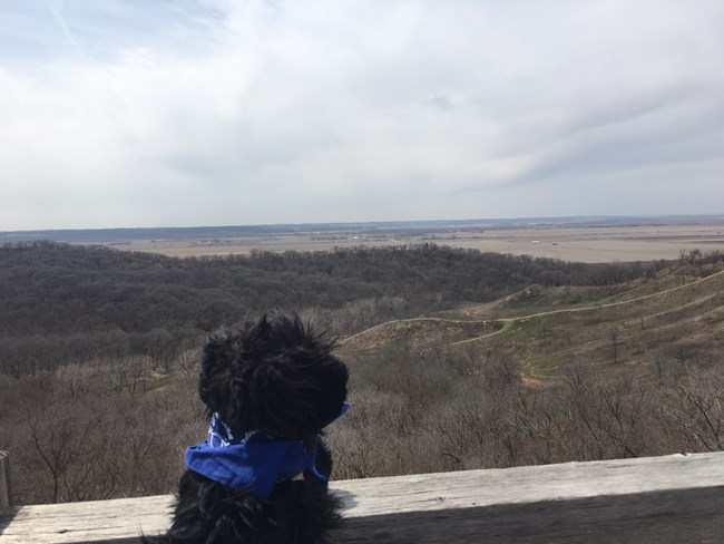 stuffed pup overlooking  river valley