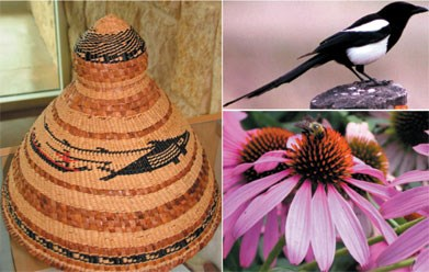Three images: black and white magpie, and purple prairie coneflower with bee and Clatsop chief's hat made from red cedar, raffia, and sinew depicting whale hunt,