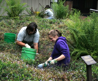 Youth Conservation Corps students weeding