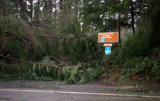 Fallen Trees blocking the Fort to Sea Trailhead at Fort Clatsop