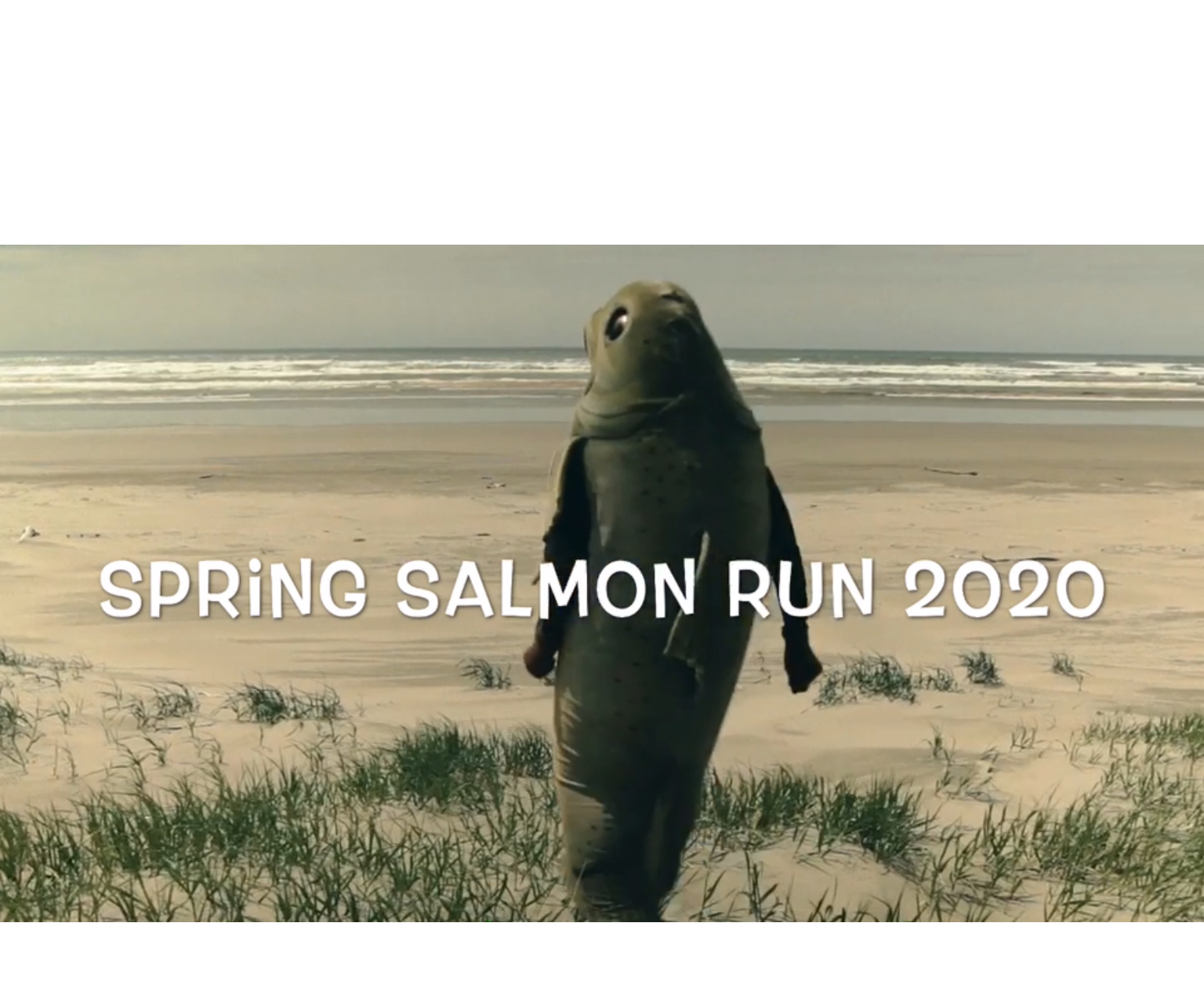 Person in Salmon costume walking across dunes to beach with words Spring Salmon Run 2020 across the middle