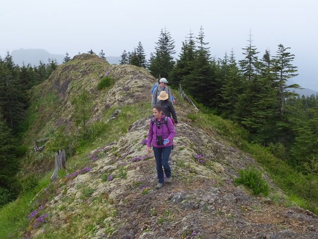 Four hikers on the crest of a hill
