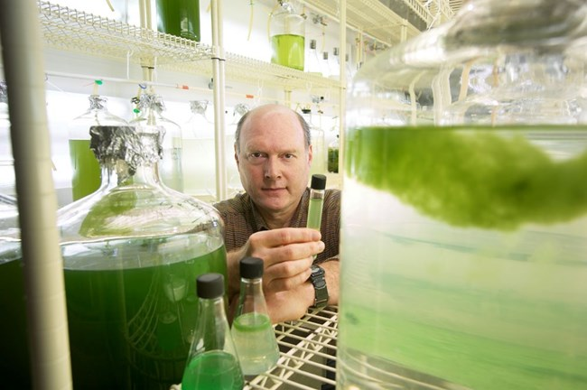 Dr. Carmichael holding a tube filled with water and algae behind large glass jars filled with water and algae.