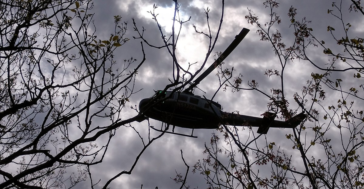 Helicopter on a cloudy day seen hovering through bare tree branches