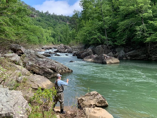 A man is fly fishing, standing on the rocky banks of the Little River surrounded by green trees and canyon cliffs.