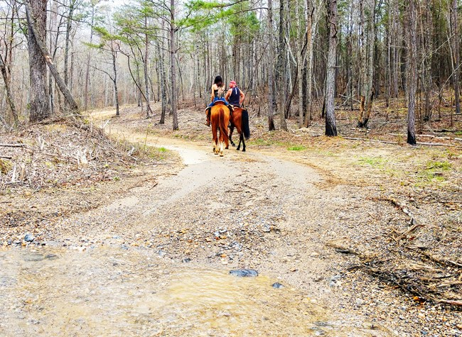 Horse riders on a dirt road in the woods