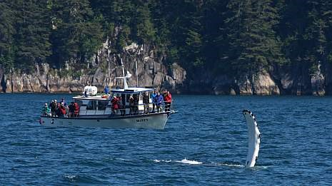 a group aboard a boat in kenai fjords national park watch a whale wave its fin