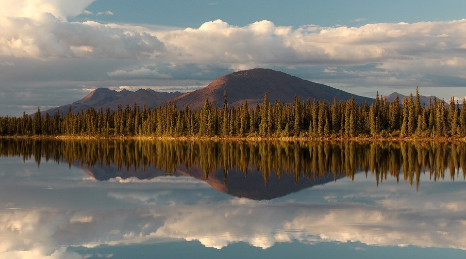 puffy white clouds, mountains, and golden-hued spruce trees reflect in calm blue water