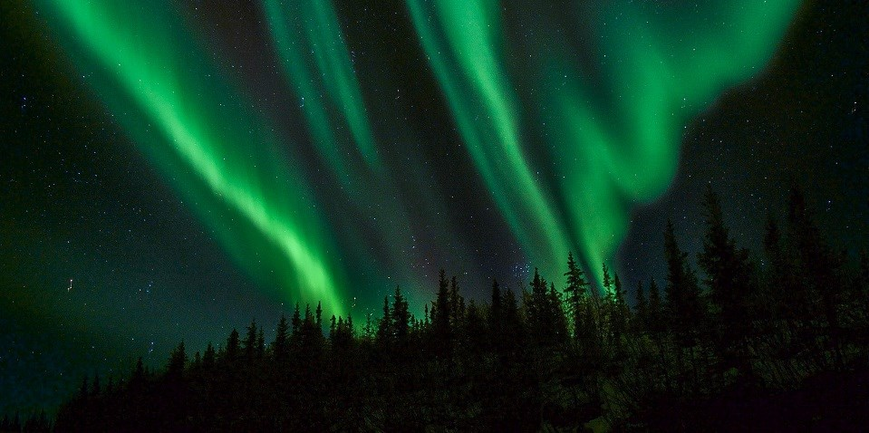 Green ribbons of aurora and stars above spruce trees
