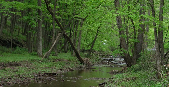 creek in forested area