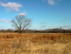 Johnson Settlement Prairie