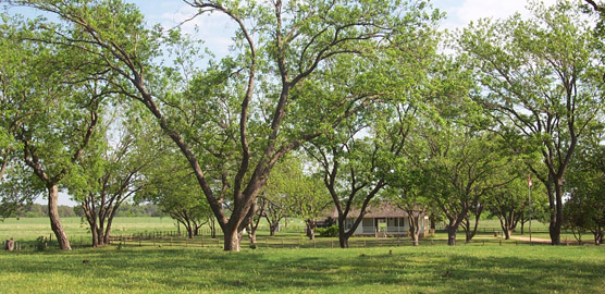 The LBJ Ranch Pecan Grove with the Birthplace in the background.