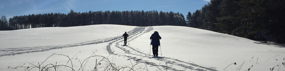 Winter Cross-Country Skiing in the Park