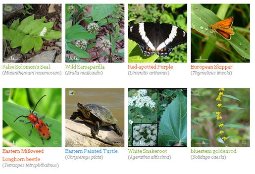 iNaturalist images