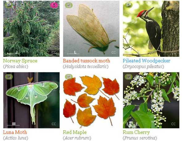 iNaturalist collage