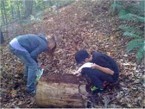 Students looking under log