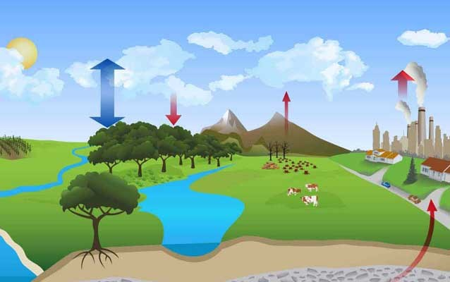 Drawing showing carbon cycle on the land