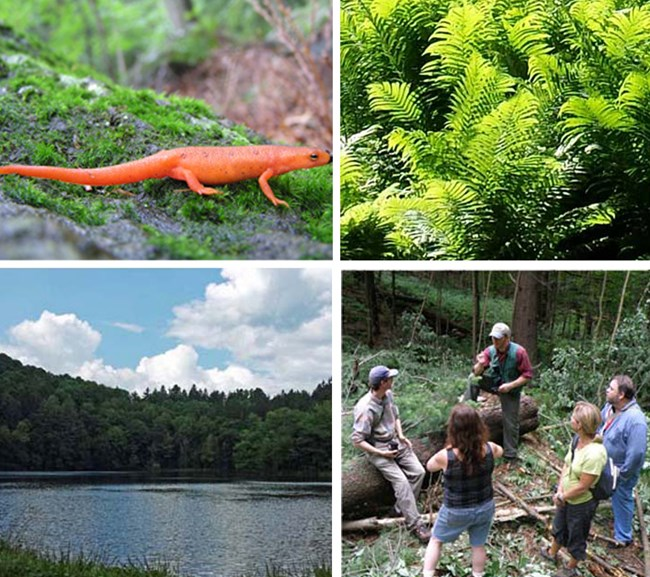 Salamander ferns pogue and people collage