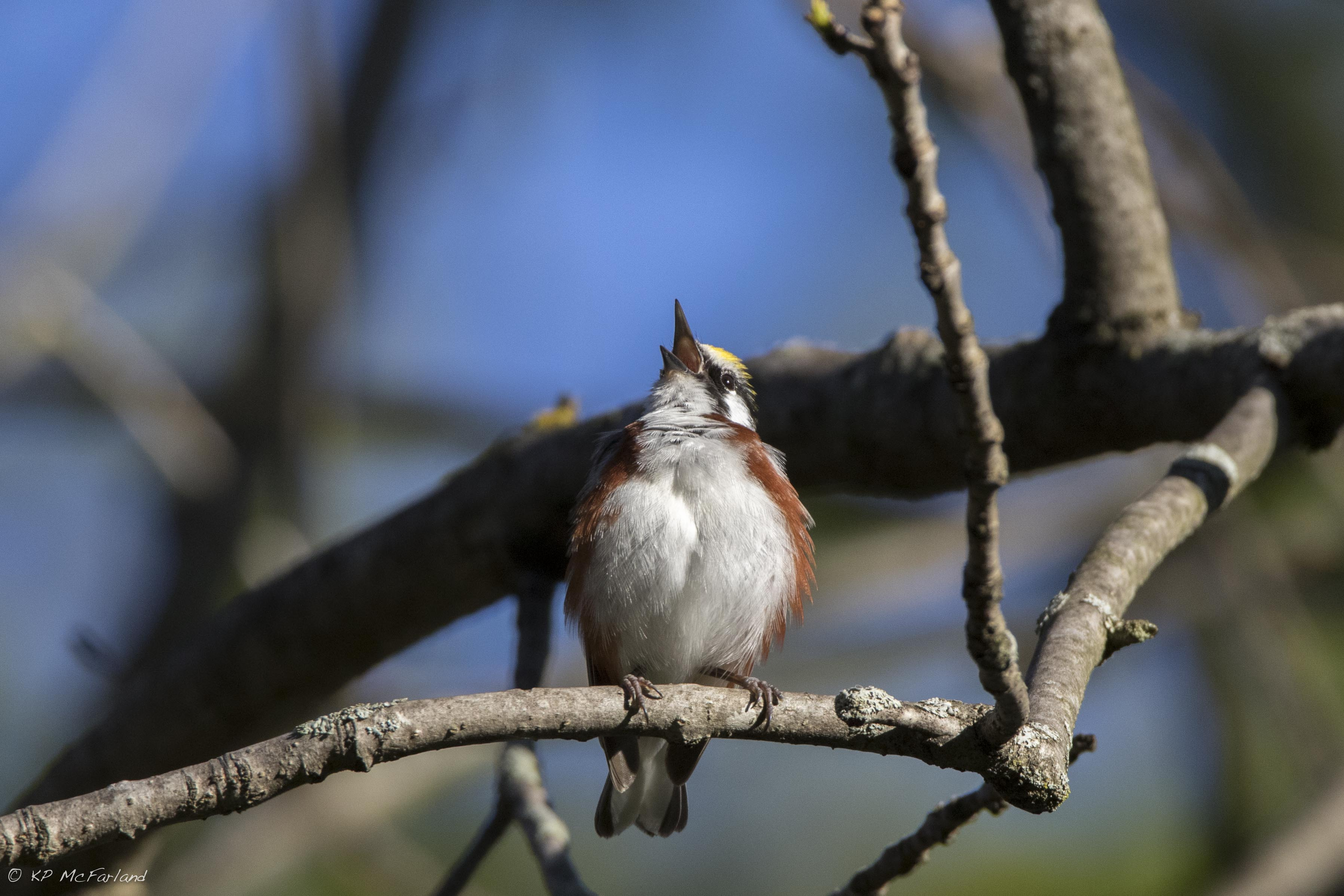 Migratory bird on a tree branch