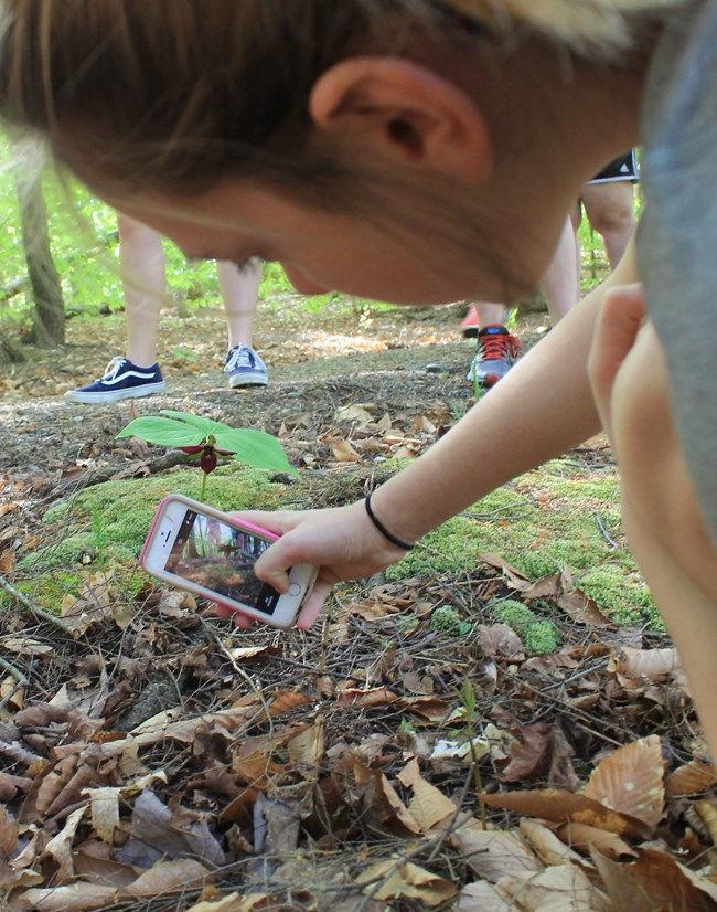 Cell phone being used for iNaturalist