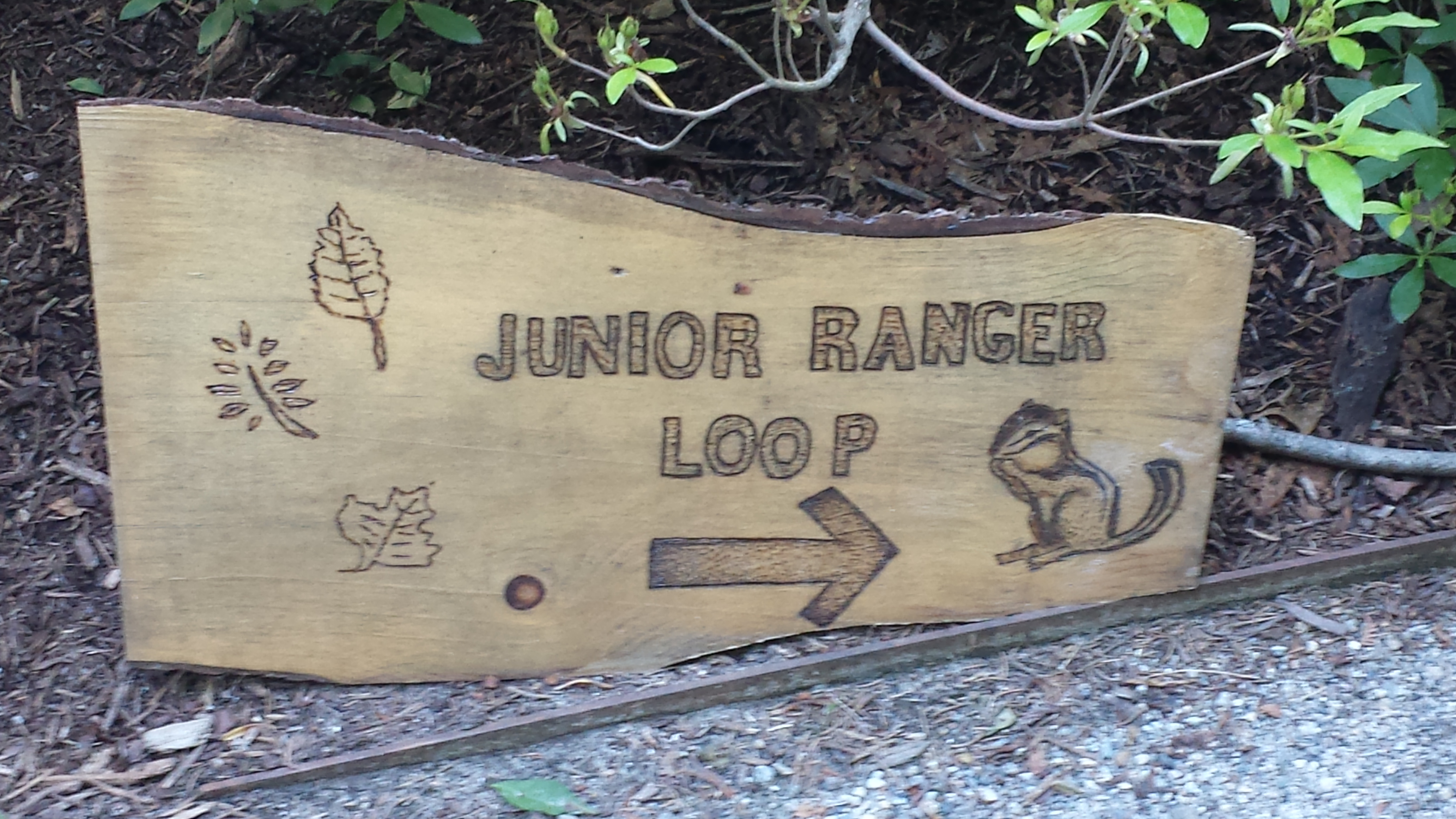 A wooden sign with Junior Ranger Loop written on it