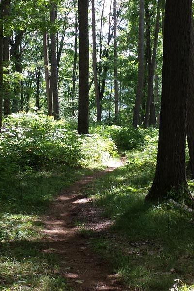 Dappled light and winding trail through the woods