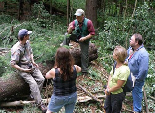 Group of people in the forest attend workshop with forester