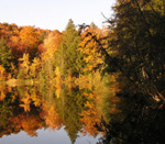 Autumn scene of deciduous and evergreen trees perfectly reflected in the still water of the Pogue. Photo by Nora Mitchell.