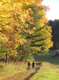 A couple walk hand-in-hand along a dirt two-track road at the edge of a sunny meadow. A gold-leaved tree beside them seems lit from within. Photo by Nora Mitchell.