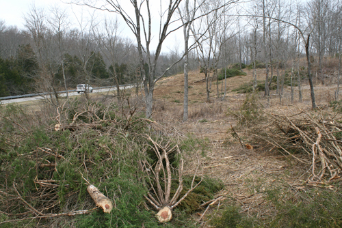 Cut cedar trees lay in piles where a barrens, or prairie, is being restored at Mammoth Cave NP.