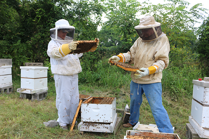 beekeepers at hives
