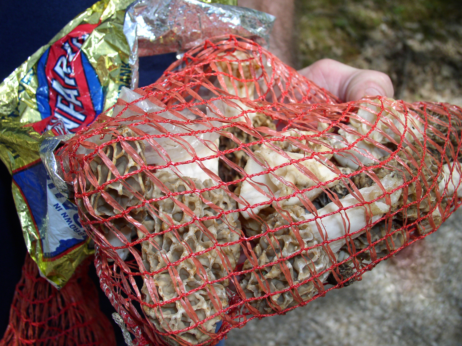 Mesh bags are needed to collect mushrooms at Mammoth Cave NP.