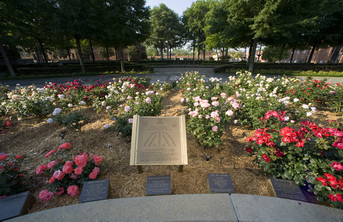 "International ""I Have A Dream"" World Peace Rose Garden"