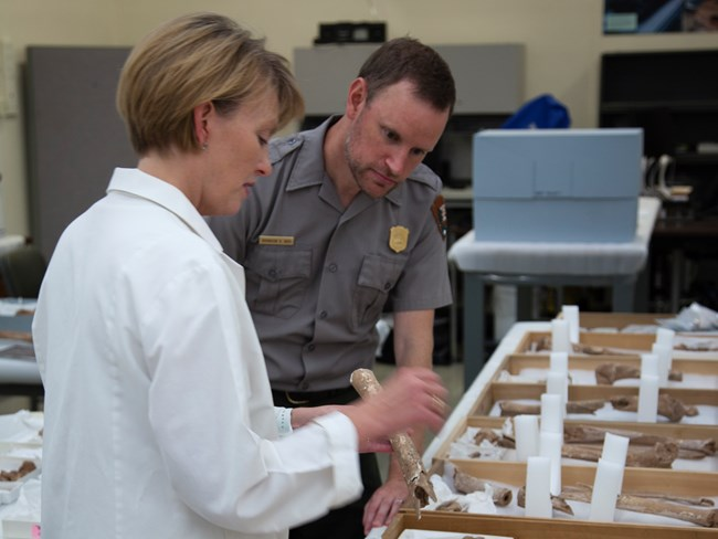 A female scientist and male park ranger examine a bone in a laboratory
