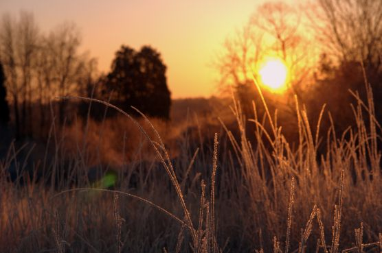 Morning dew clings to the grasses as the sun rises over the battlefield.