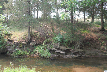 Outcrop along Young's Branch