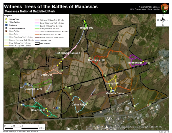 Map of Witness Trees in the Battlefield