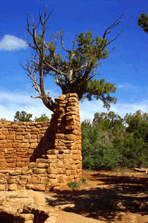 Cedar Tree Tower