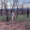 Researchers in a burned area of Pinyon-Juniper in 1990.