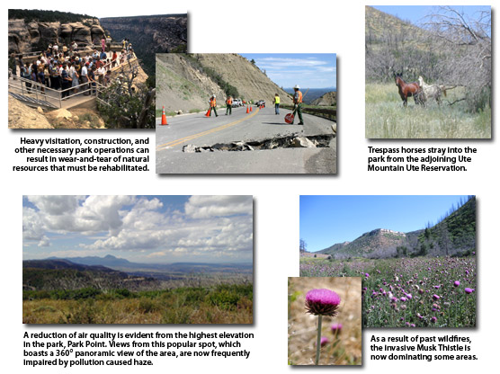 A variety of images showing environmental factors such as declining visibility and the invasive musk thistle.