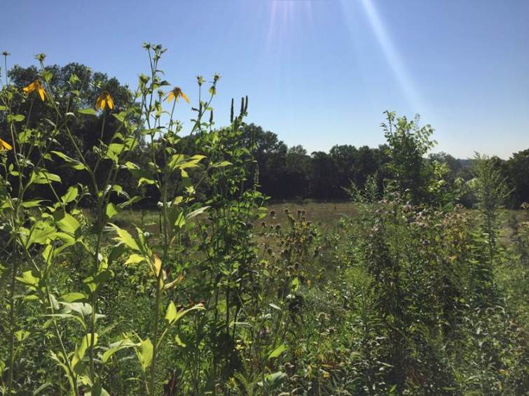 Pollinator plantings at Coldwater Spring