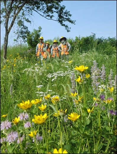 Prairie flowers with workers in the background