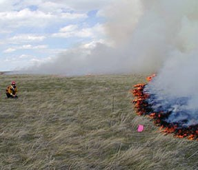 Staff watches a controlled prairie fire burns