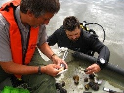 Biologists study native, Mississippi River mussels
