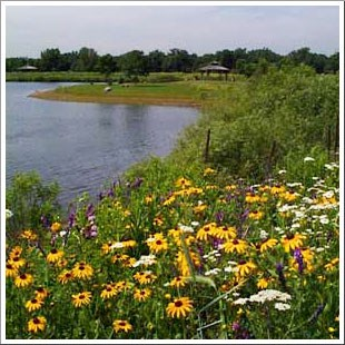 A lake with prairie flowers on its banks