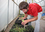 Ranger Burns cares for seedlings in a greenhouse.