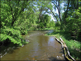 Rice Creek flows through the forest towards the Mississippi River.